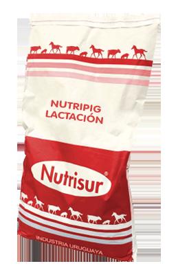Nutripig-Lactacion