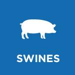 swines